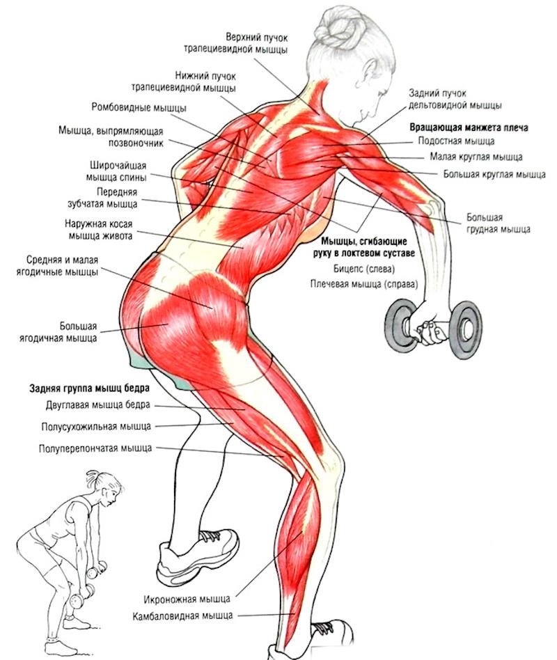 Прямые мышцы спины в домашних условиях