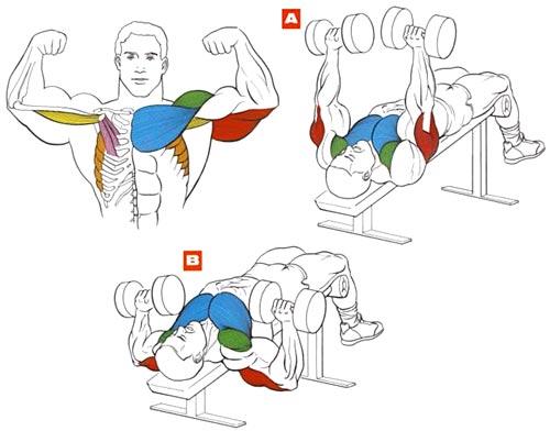 Упражнения на грудные в домашних условиях 978