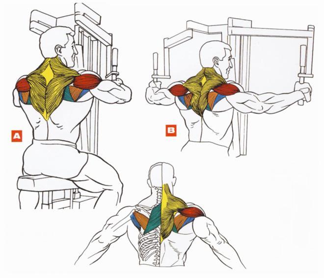 Обратные разведения в тренажере Peck-Deck