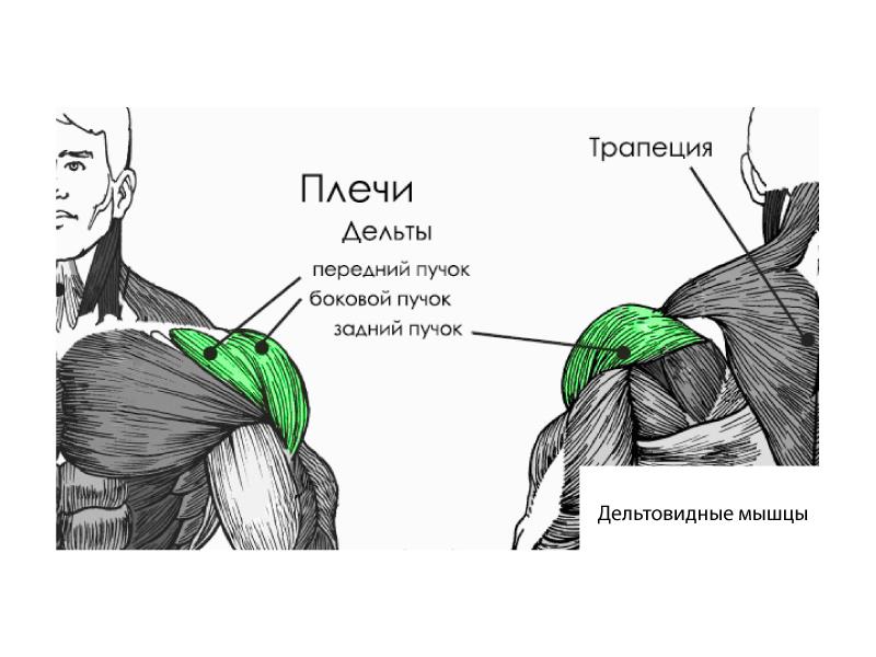 Как накачать плечи и дельтовидную мышцу