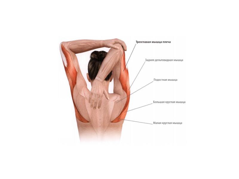 Растяжка мышц плеч