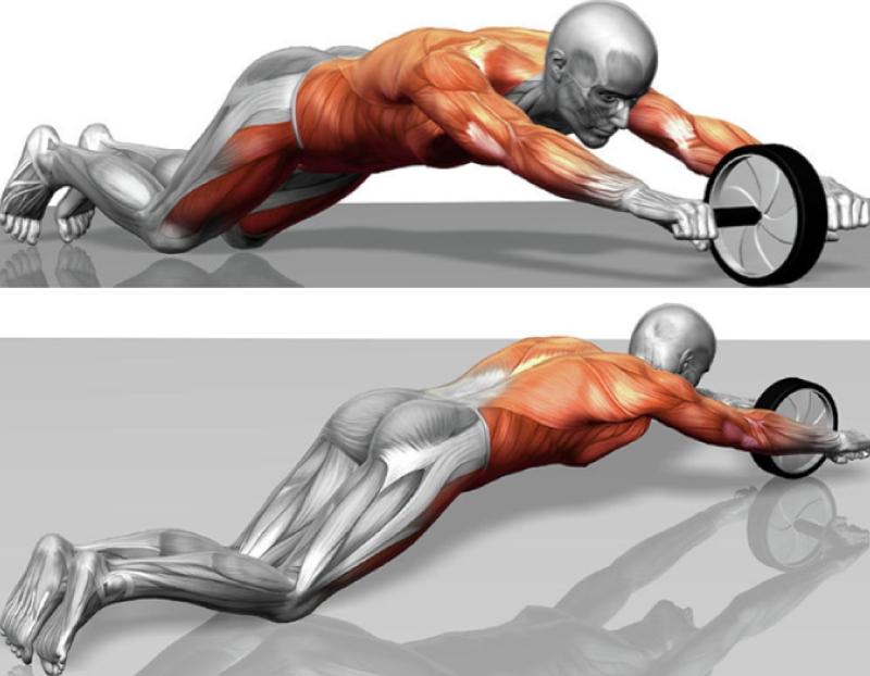 Какие группы мышц охватываются
