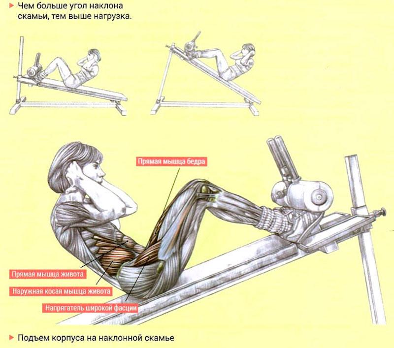 Скручивание на скамье с наклоном корпуса вниз