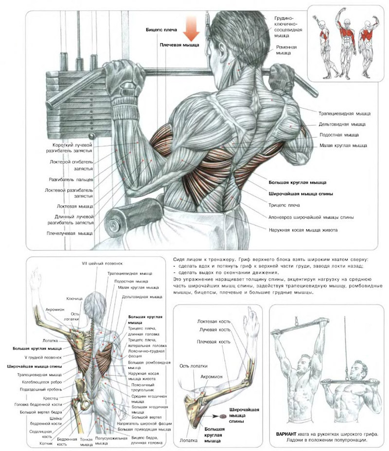 Тяга вертикального блока к груди