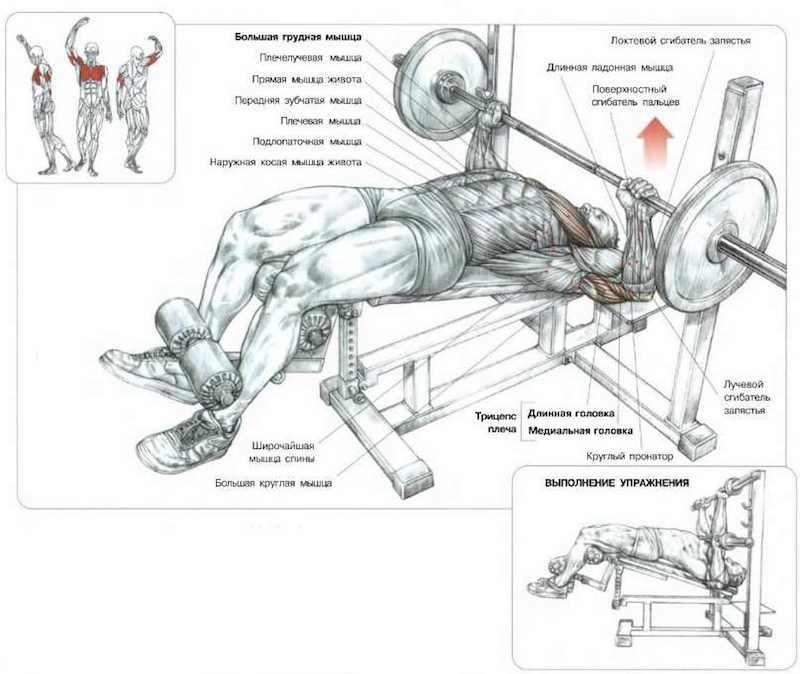 Упражнения на грудь: Жим штанги/гантелей лежа с наклоном скамьи вниз