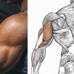 Топ-8 упражнений, которые гарантировано «взорвут» ростом ваши трицепсы